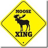 Moose_xing